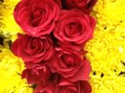 Flowers up close!