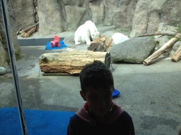 Polar bear time.