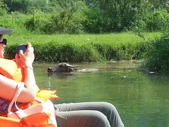 Hello water buffalo!