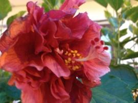 Open, beautiful flowers.