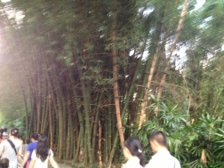 Bamboo grove on way to light show.