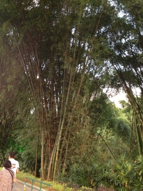 Little more bamboo....