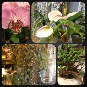 Greenfingers Flower Shop