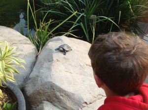 Tiny turtle on big rock...