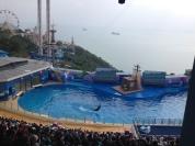 Randomly experienced a dolphin performance!