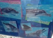 Lovely dolphins...