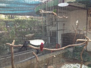 This aviary isn't as open as the other one we were at, but it had larger beautiful tropical birds.