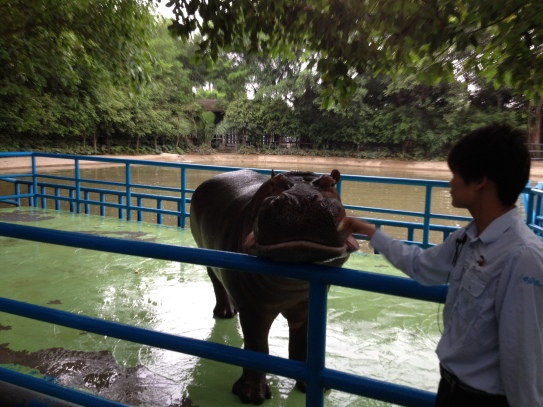 Yes, we met a hippo.