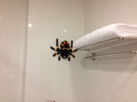 Spider in the bathroom? Uh ok.