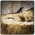 Skink siting while on duty, quite cool.