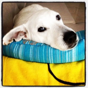 She kept watching me thru the days... Sweet dog.