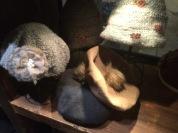 Wool but cute!