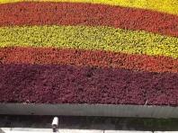 Xi'An flowers