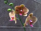 Beautiful Third bloom!!