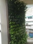 Another beautiful living wall at school!