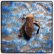 And what type of beetle is this?