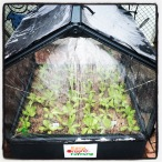 New greenhouse for students!