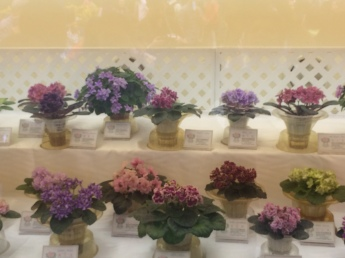 Must pause and appreciate african violets