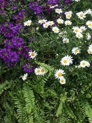 Awww daisies...