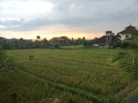 Rice paddies- flooded once a week.