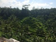 Terraced rice paddies