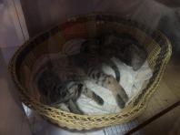 Hello sleepy kitties!