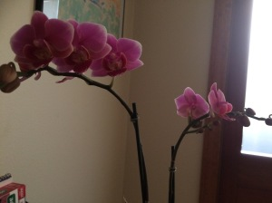 Aww, beautiful flowers from my sister