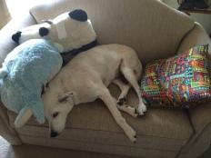 Sweet dog resting...