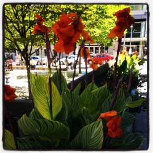 Lovely flowers in downtown Portland.