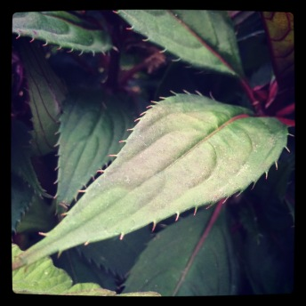 Loved these leaves...
