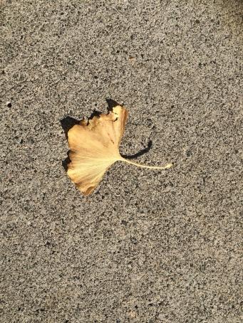 Loved this ginko biloba leaf....